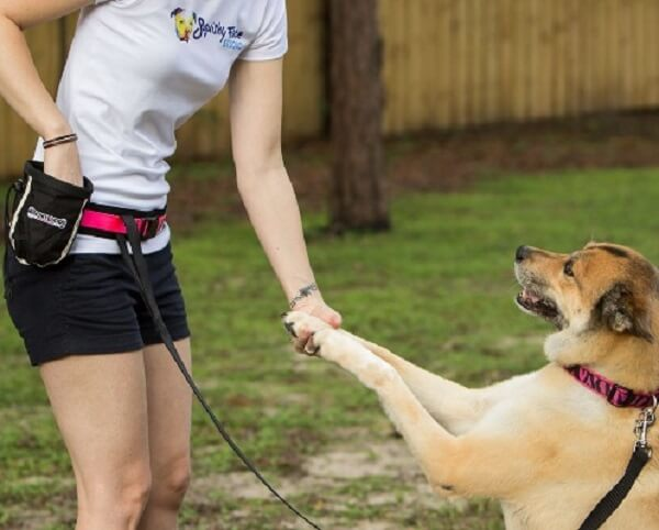 What is the purpose of dog training?