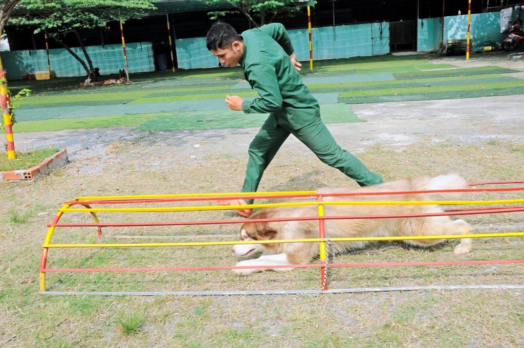 Cách huấn luyện chó cơ bản thành công tại nhà